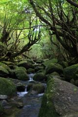 森林の小川