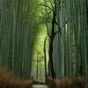 竹林の道3