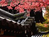 紅葉が始まった京都シリーズ おしまい