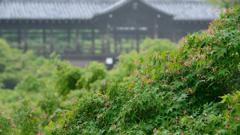 東福寺1 ~新緑の京都シリーズ~