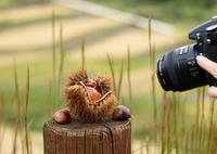 NIKON NIKON D600で撮影した(坂折棚田2 いいの撮れてますか?)の写真(画像)