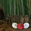 竹林の脇道
