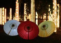 NIKON NIKON D600で撮影した(嵐山 キモノフォレスト)の写真(画像)