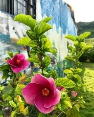 壁面に佇む花