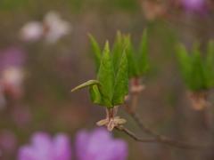 天然の折り鶴