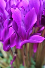 冬にブルーの花は合うか