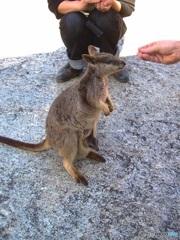 小さいけれども母なのよ。(オーストラリアの生き物 1)