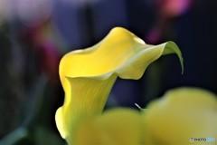 黄色の松明