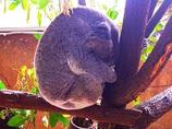 抱かれ疲れ(オーストラリアの生き物 2)