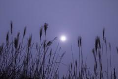 遠い太陽 (ススキ 21)
