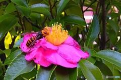 スズメバチも蜜を吸う?