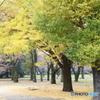 小金井公園 秋7