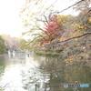 井の頭公園 池3