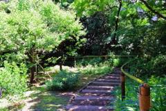 新緑の階段
