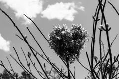 枯花のハート