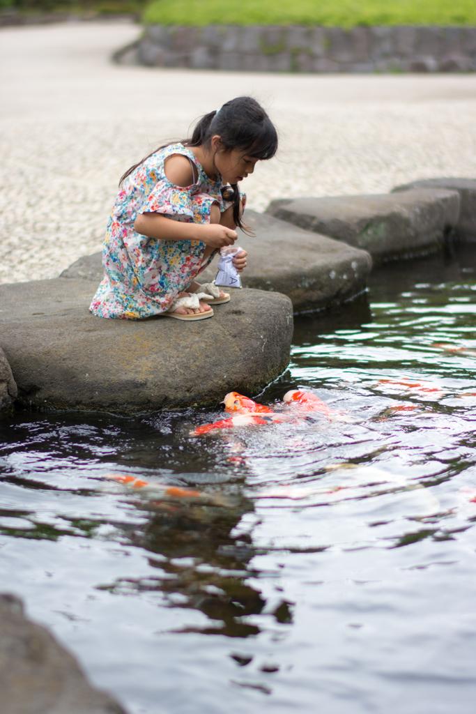 鯉さん食べてるかな