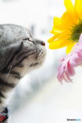 斜め構図の猫と花