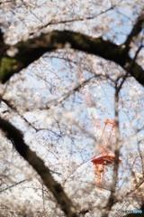 桜とクレーン