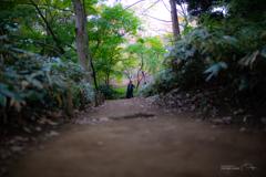六義園 紅葉カメラ