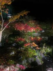 ライトアップ 永観堂2