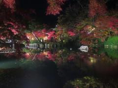 ライトアップ 永観堂