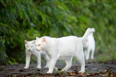 白猫プロジェクト