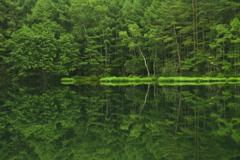みどりの池