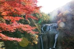 日本三名瀑 袋田の滝の紅葉