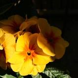 花は 花は