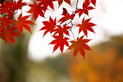 古峯園の秋♪8