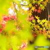 崇禅寺の秋