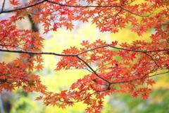 古峯園の秋♪6