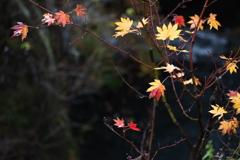 日光・秋のはじまり♪7