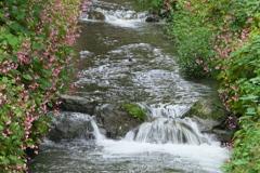 水辺の秋海棠♪2