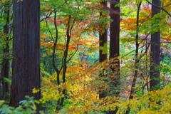 古峯園の秋♪1