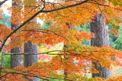 古峯園の秋♪2