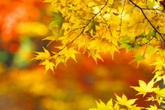 日光・田母沢御用邸の秋Ⅱ