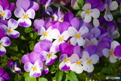 元気な冬の花♪