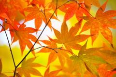 古峯園の秋♪10