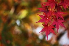富弘記念館・紅葉♪3