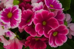 春を呼ぶ花たちⅡ
