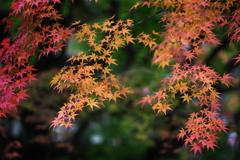 古峰神社の秋♪10