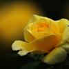 井頭公園の薔薇♪8