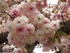 フラワーパークの春♪4