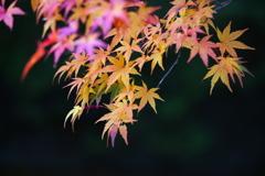古峰神社の秋♪9