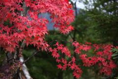 日光の秋♪3