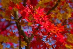 日光・田母沢御用邸の秋
