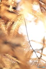 秋の日差しの中で、、