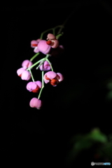 夜に咲く。。