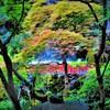 初夏の紅葉 (^_^)